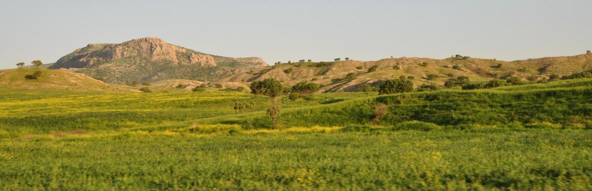 Das grüne Kurdistan