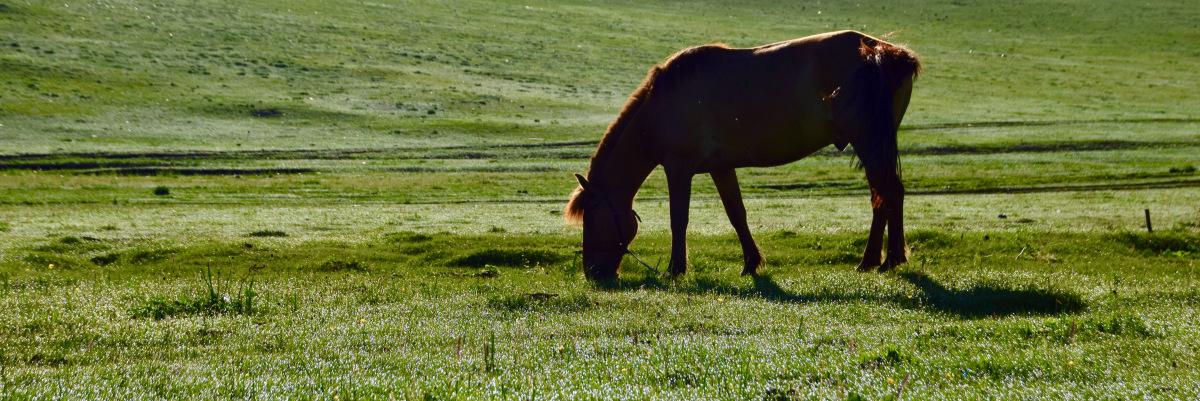 Pferdinand, Gussdarf undTautropfen
