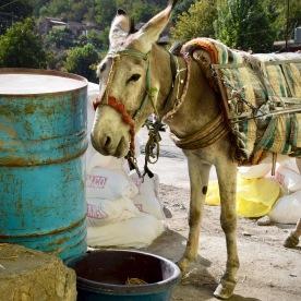 Heu für den Esel an der Kraftstation in Penjiwen, Kurdistan