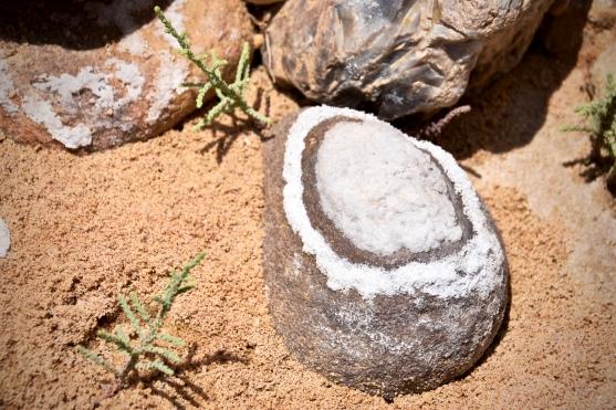 22 Ein Stein mit dieser ungewöhnlichen Salzkruste entdeckt im Wadi Himara.