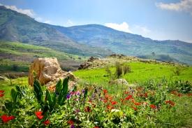 03 Blumen sind das Lächeln der Erde. Frühling im Wadi al-Sir.