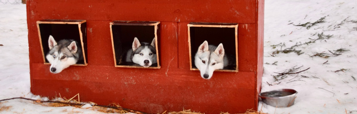 Fotostrecke: Mit dem Hundeschlitten ins neueJahr