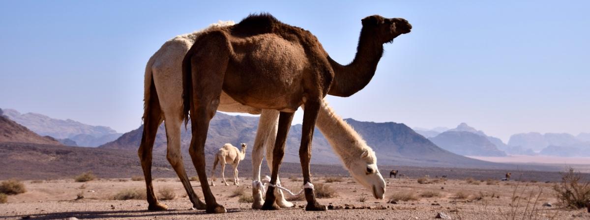 Wadi Rum: Die Wüste als Rückzugsort in Zeiten derPandemie